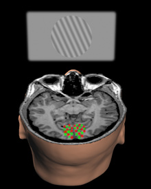 www.danshope.com - Reading Thoughts With Brain Imaging